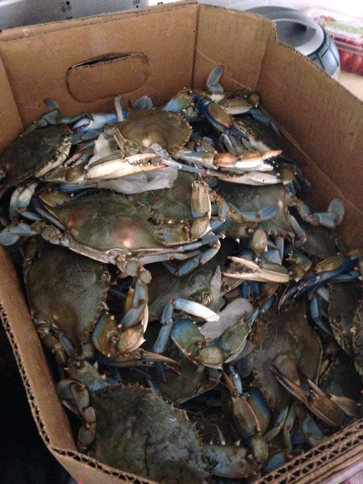Crabs Caught On The Chesapeake Bay
